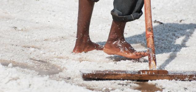 saltfoot